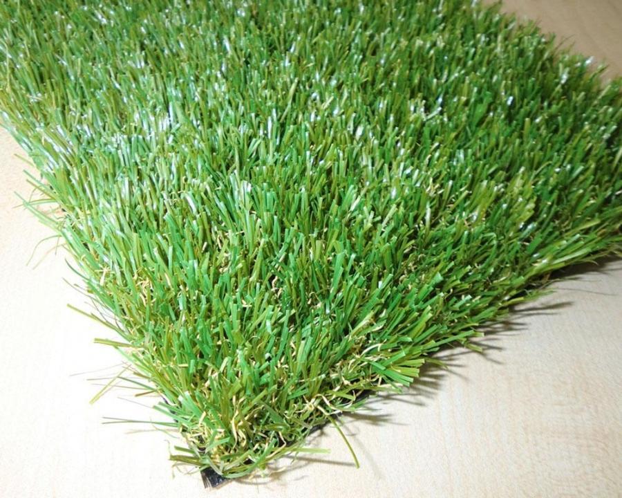 Carpet Grass Photos
