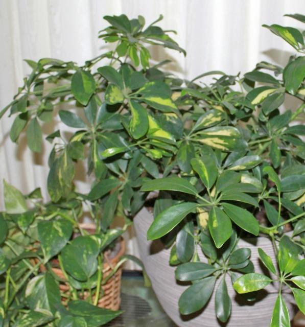 Photos of common house plants - Common indoor plants ...