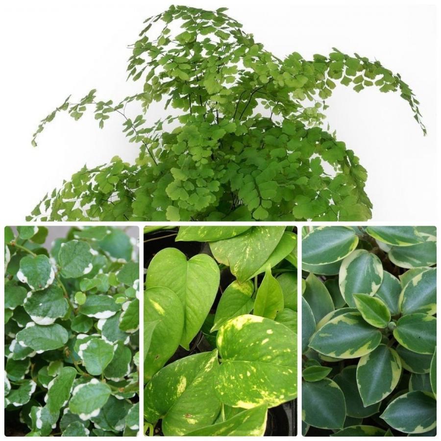Photos Of Common House Plants
