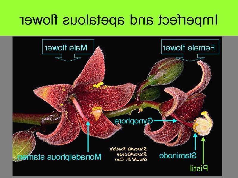 Apetalous Flowers Alder Photo