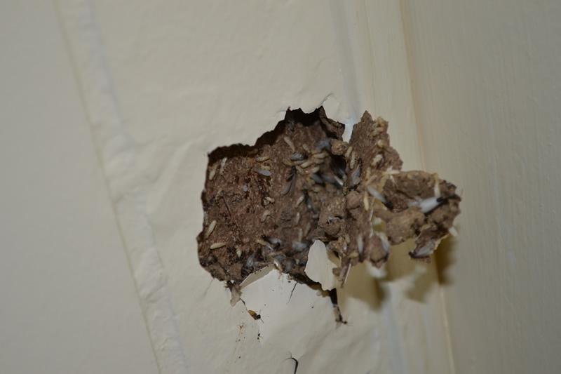 photo termite damage drywall