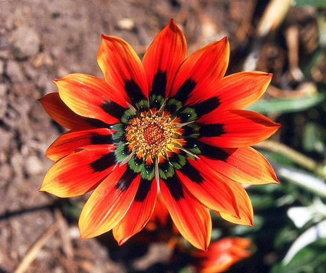 Mexican Flower Photos