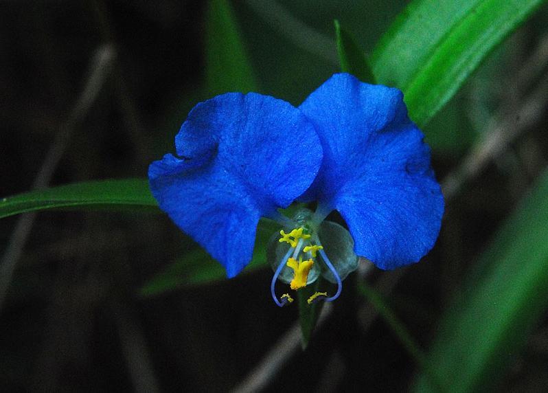 Rare Flowers Florida Photos