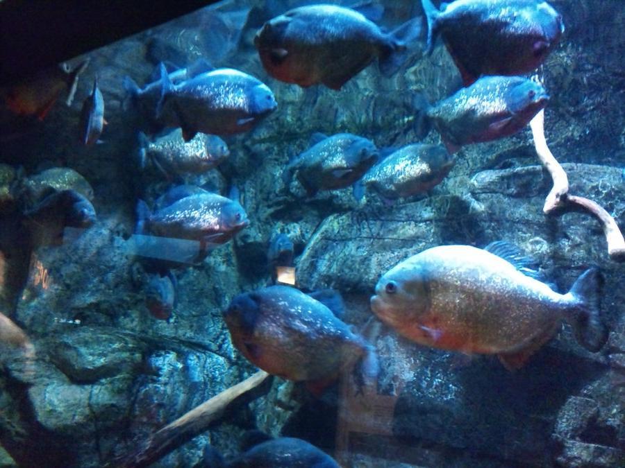 Mystic Aquarium Photos