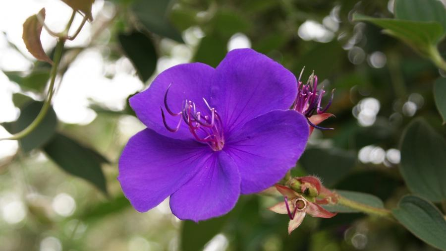 purple tropical flowers image