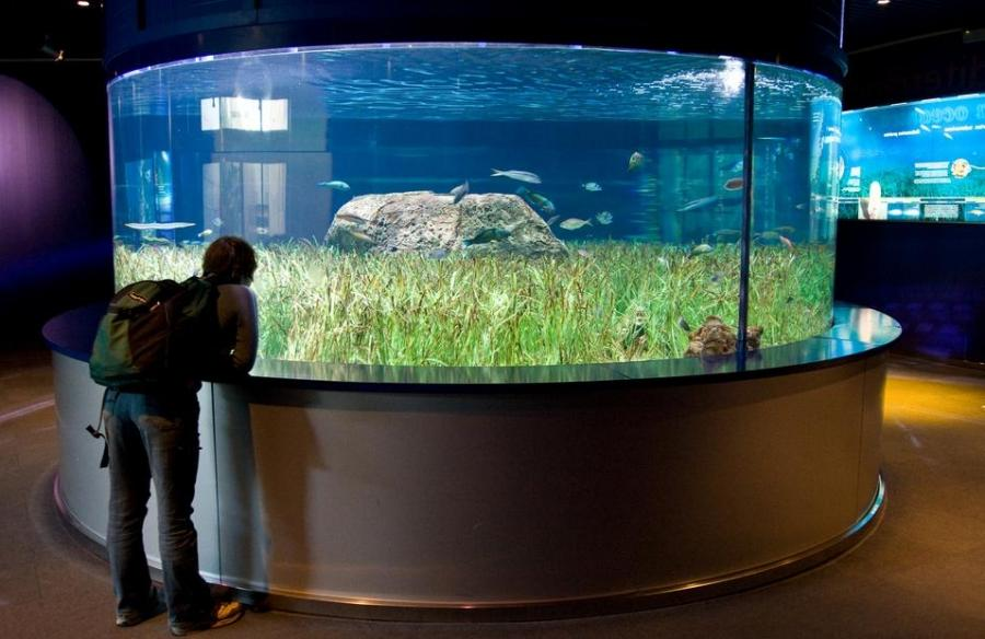Beautiful aquarium photos Beautiful aquariums for home