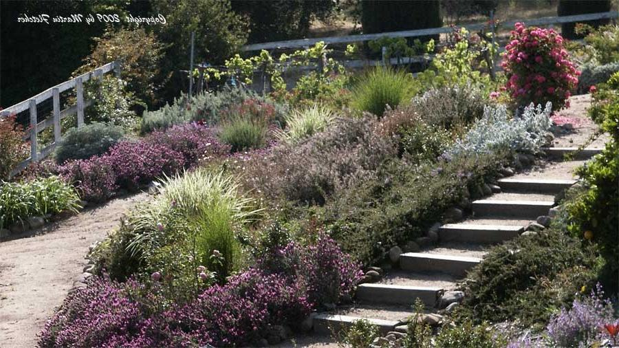 photos of drought resistant gardens