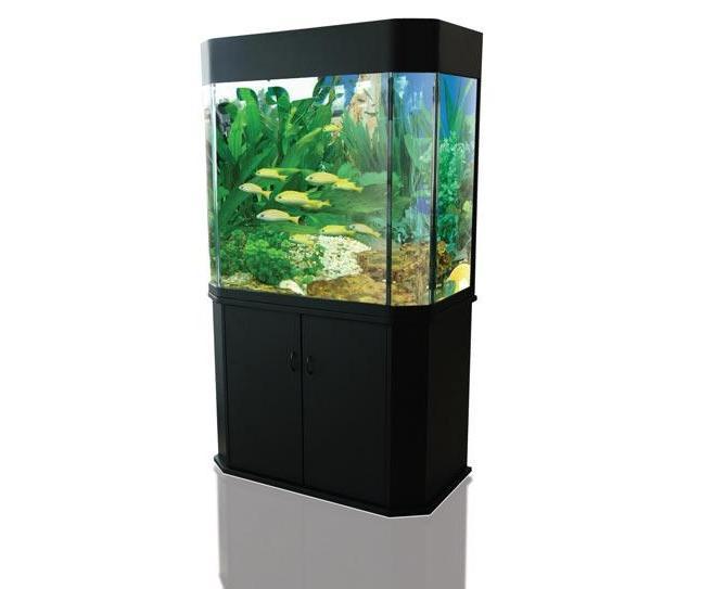 1000 photos of aquarium fish. Black Bedroom Furniture Sets. Home Design Ideas