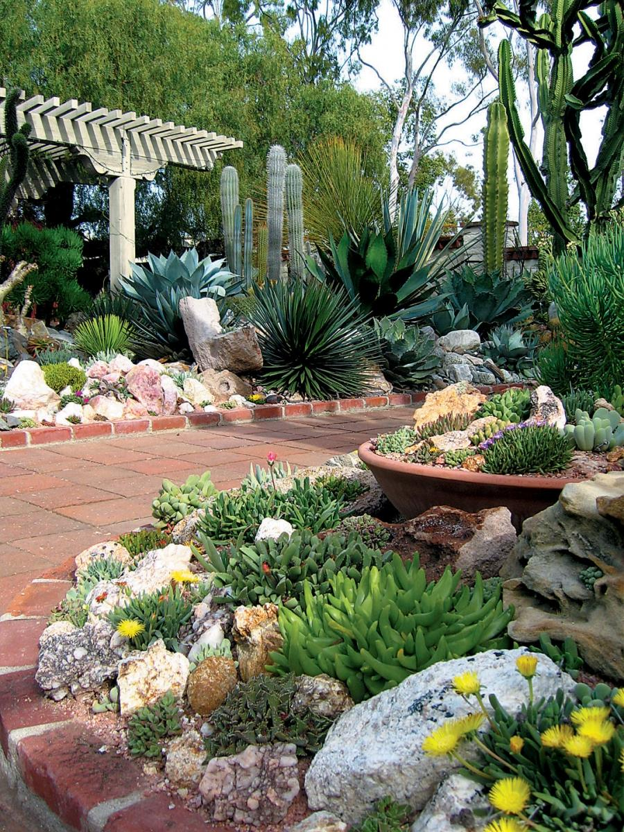 Succulent garden photos for Gartengestaltung nordseite