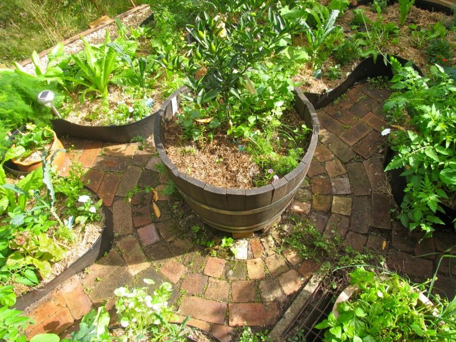 Backyard Permaculture Book : Permaculture garden photos