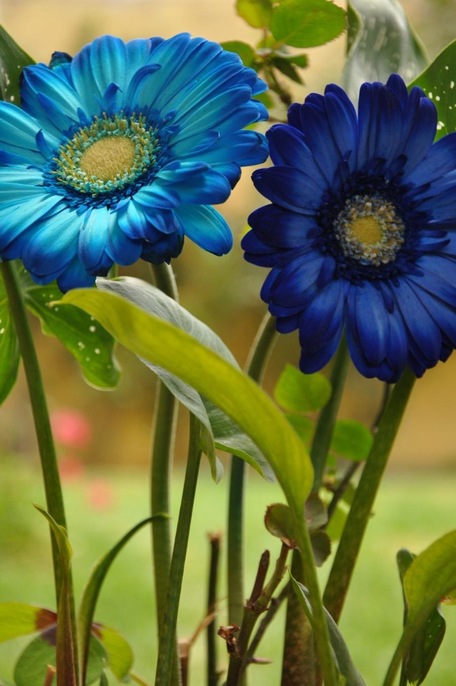 Photos Of The Most Beautiful Flowers In The World