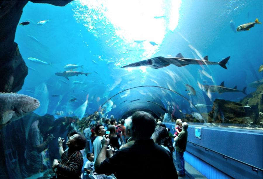 My Ga Aquarium Photos