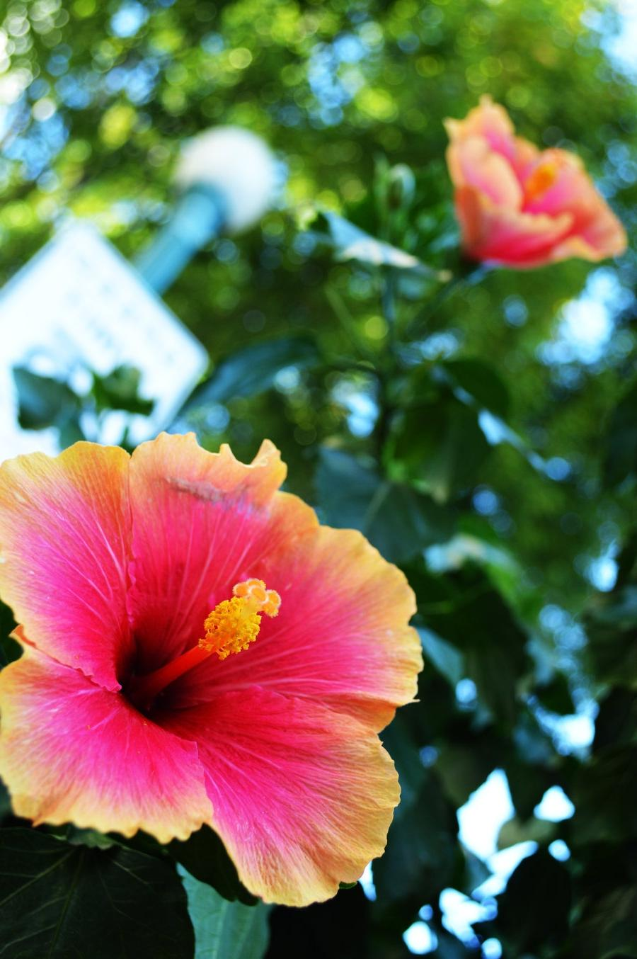 Tropical Flowers by betweenhalves Tropical Flowers by...