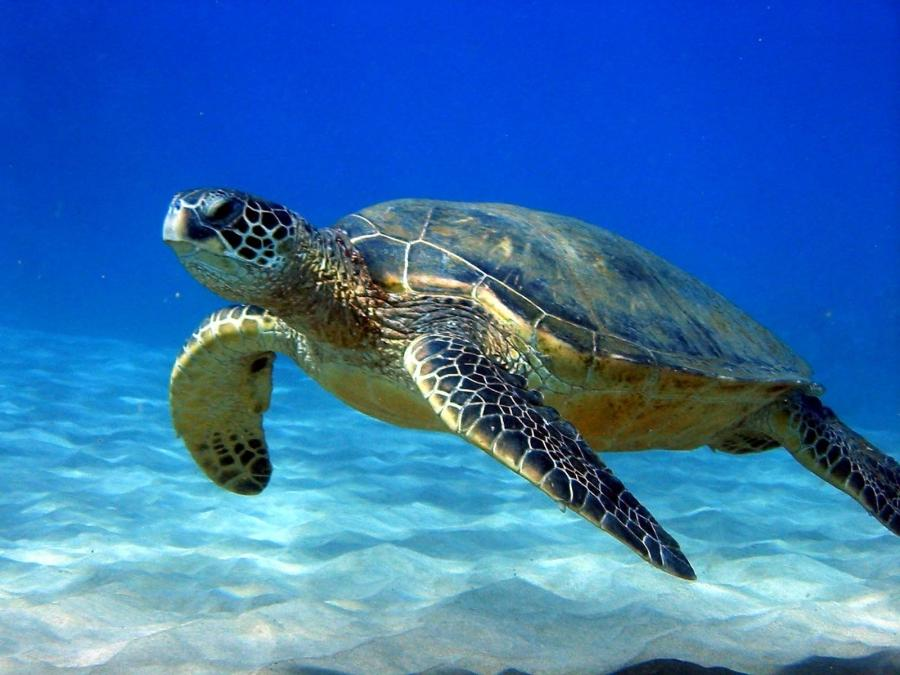Funny 3d Animal Turtle Wallpapers Hd: Turtle Photos Photo Gallery Desktop Wallpaper