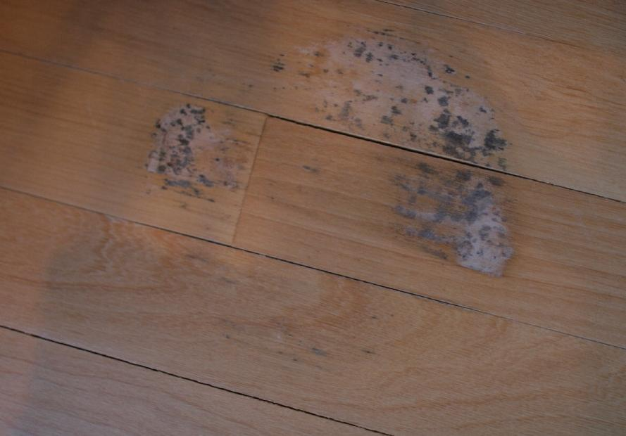 Shaw laminate flooring problems 28 images shaw for Hardwood floor recall