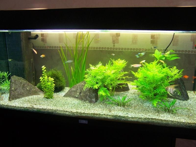 photo de vos aquarium