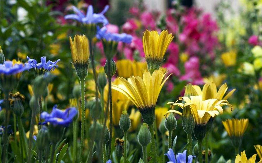 Flower scenery royalty free stock images image 29372479 - Scenery Of Flowers Photos