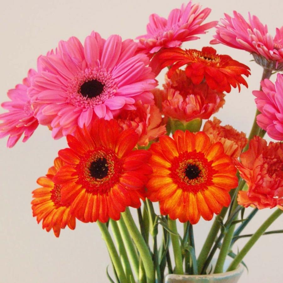 Cut Flowers Photos