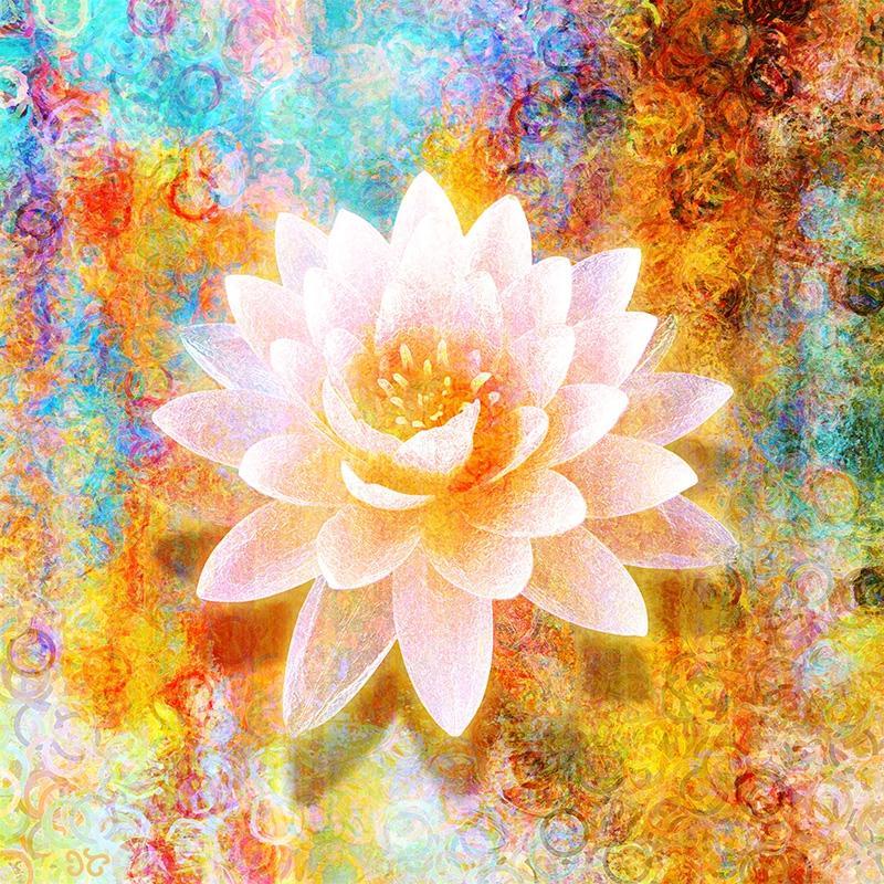 by flower joy photo