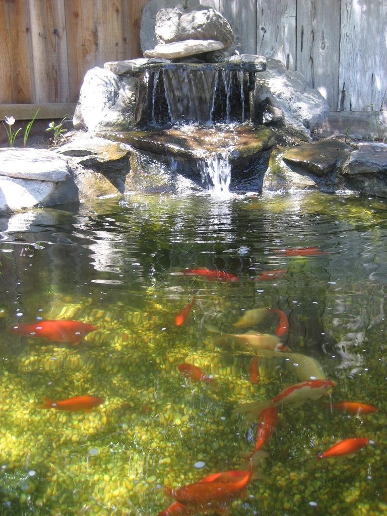 Garden ponds waterfalls photos for Goldfish pond liner