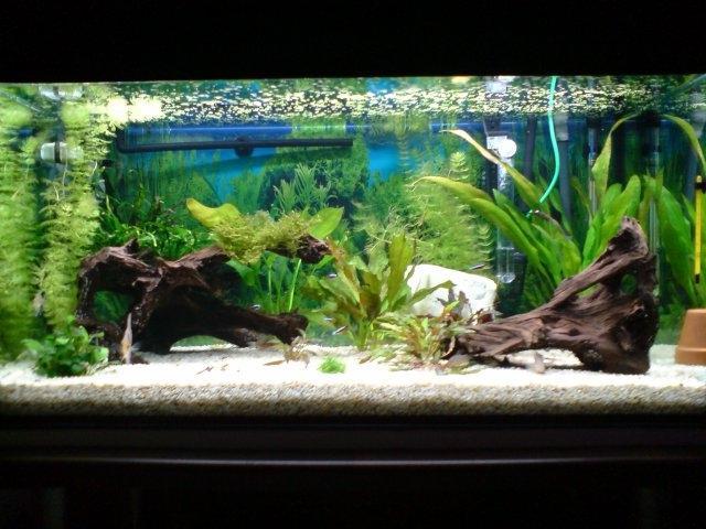 neon pour plante aquarium 28 images photo plante pour. Black Bedroom Furniture Sets. Home Design Ideas