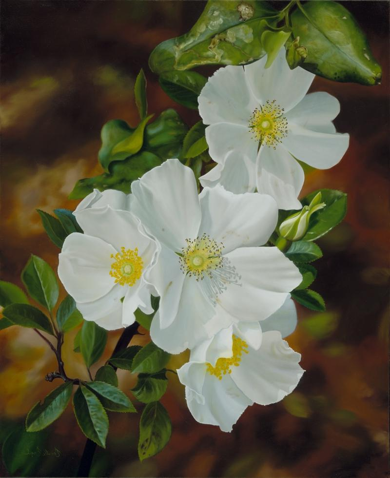 Cherokee Rose Flower Photos