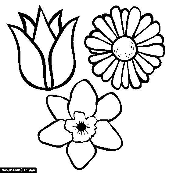 Flower Photo Color