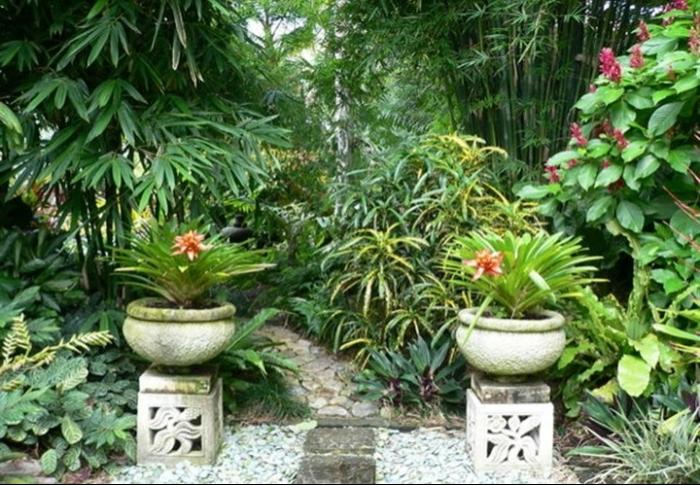 Small tropical garden photos
