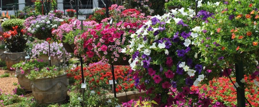 We welcome you to The Gardens at UGA. The Gardens trials the...