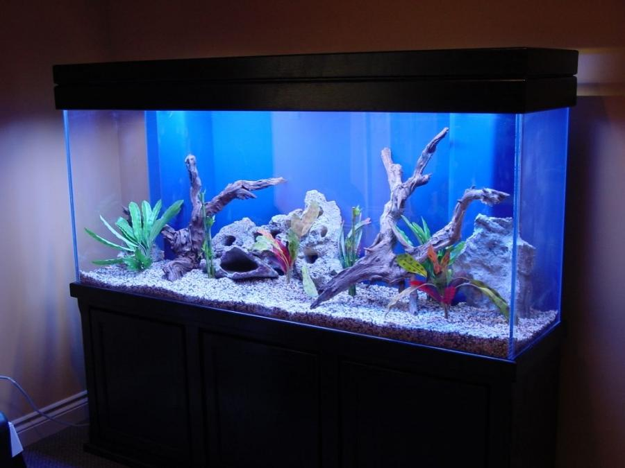 Freshwater aquarium design photos for Aquarium decoration ideas freshwater