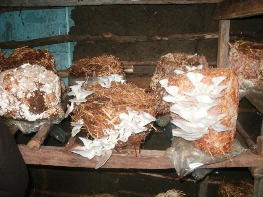 Грибы выращивание в домашних условиях в мешках 91