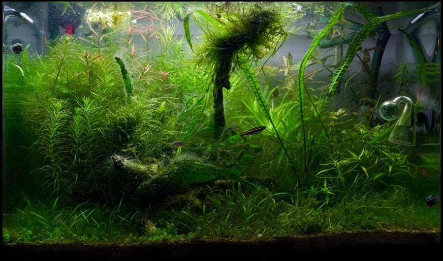 how to get rid of green algae in marine aquarium