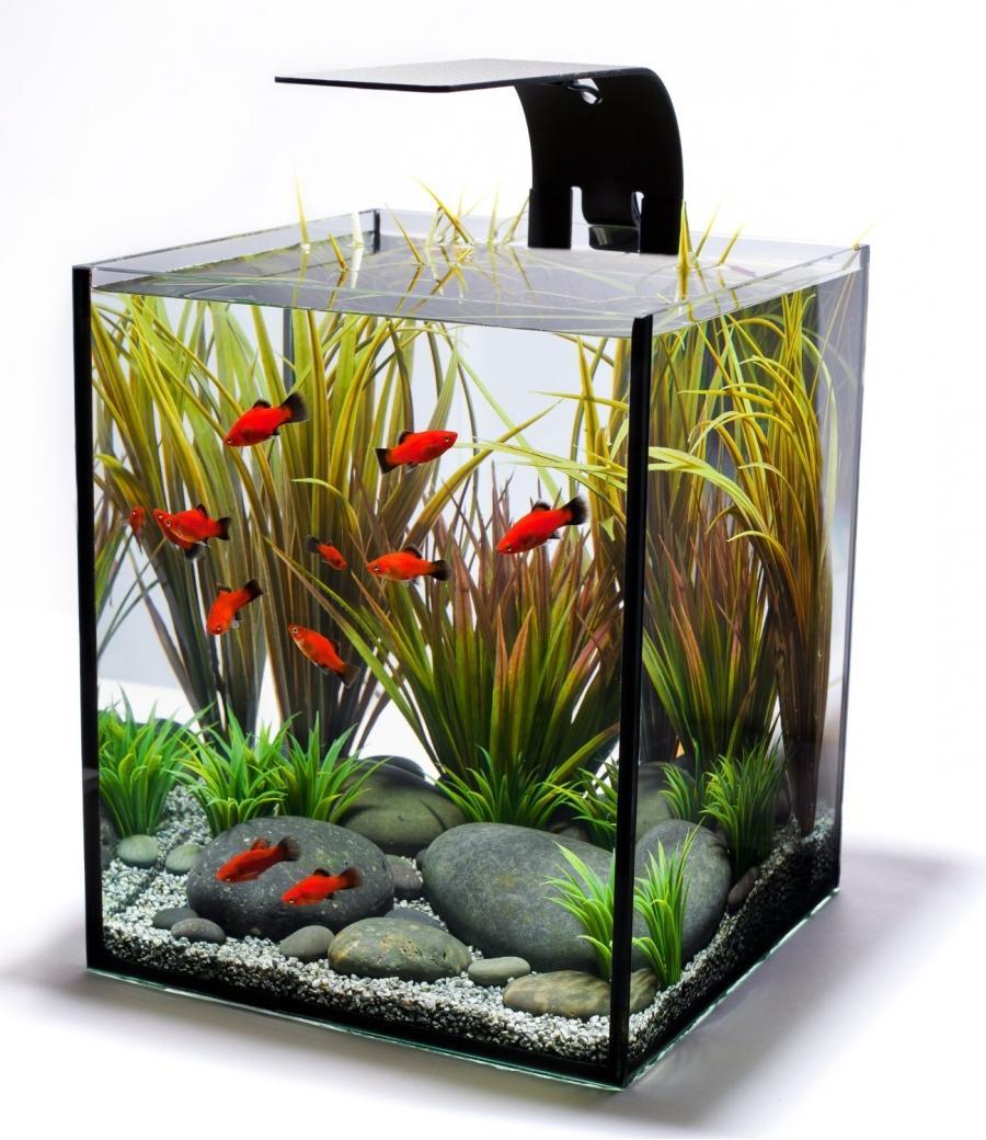 Photos Of Aquarium Tanks