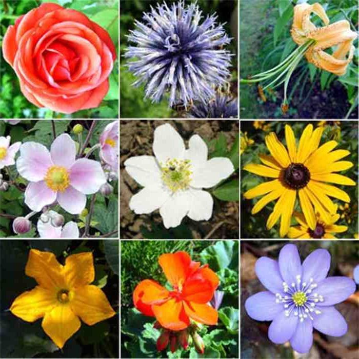 Изображение цветы на из коллекции вещи, которые я люблю