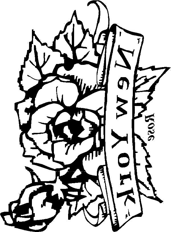New mexico state flower photos for New york state flower coloring page
