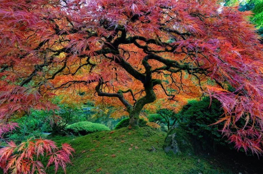 Most beautiful japanese garden photos for Most beautiful garden trees