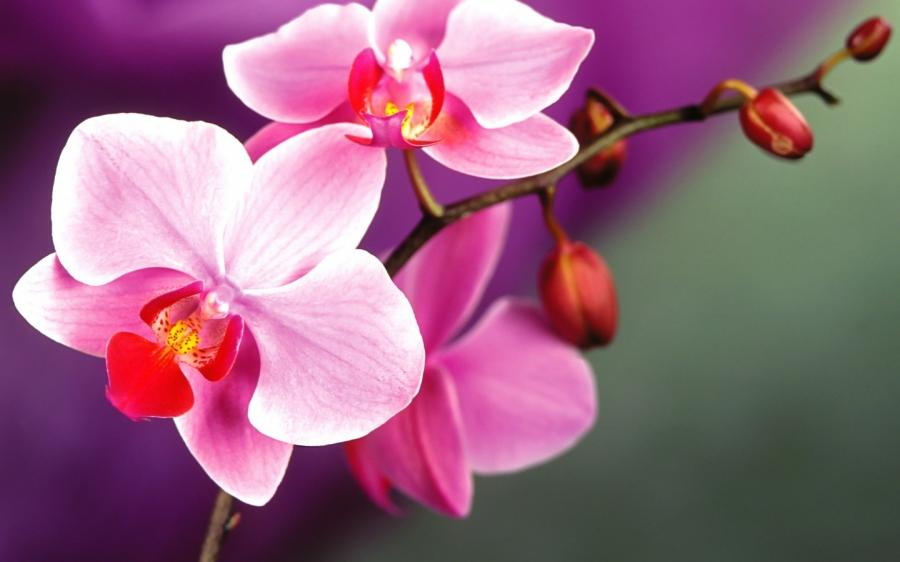 Цветы высокое разрешение