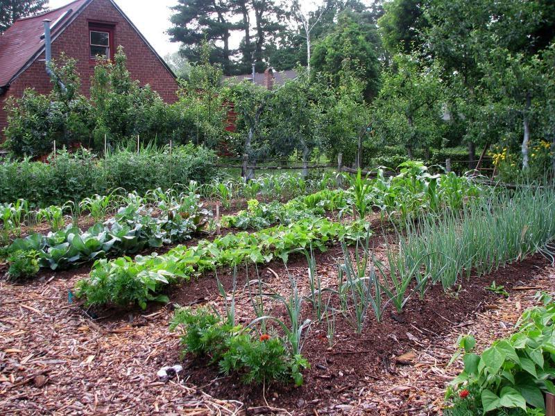 Unique vegetable garden photos for Unique vegetable garden designs