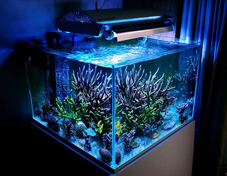 Photos Of Aquarium Designs