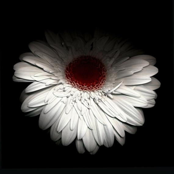 ... flower art by valentina 10 Beautiful Flower Photographs By...