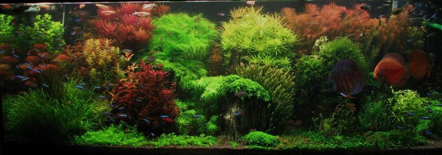 Aquascaping Wikipedia the free encyclopedia source