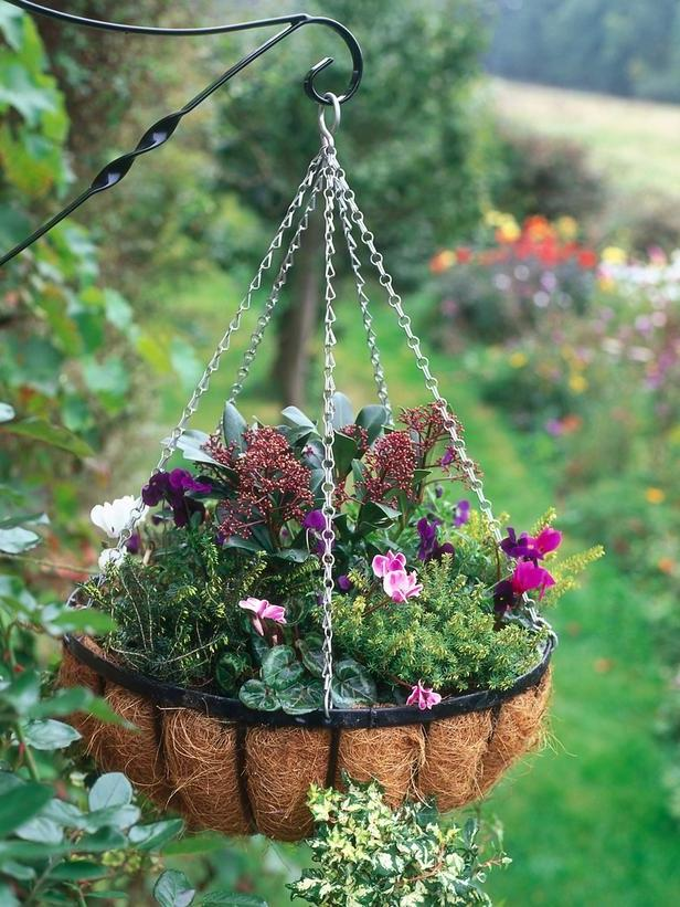 Hanging Flower Baskets For Winter : Hanging flower plants photos