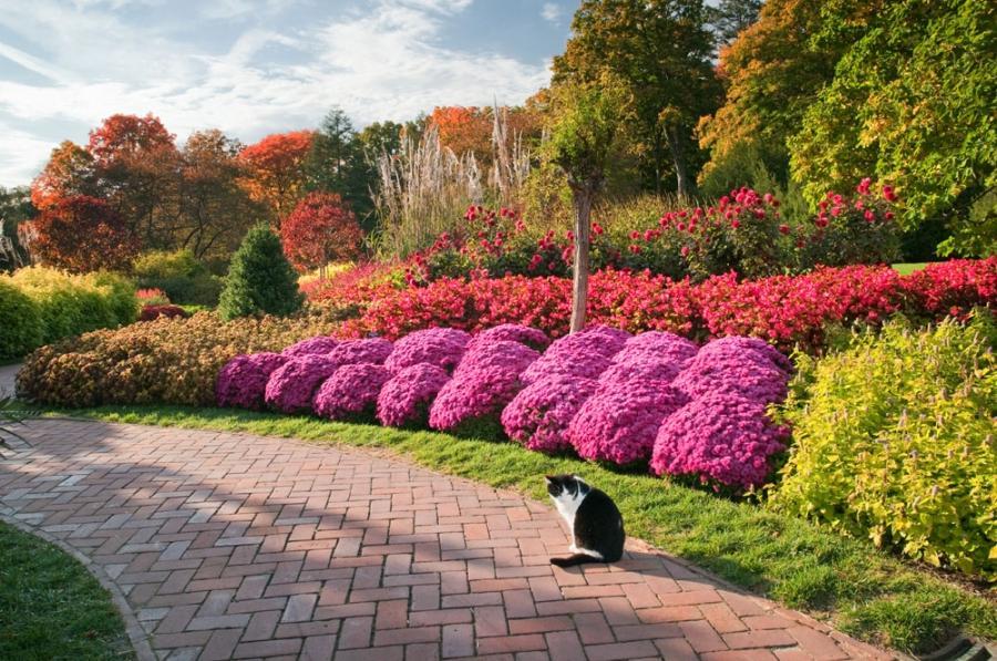 Annual flower bed photos for Annual garden designs