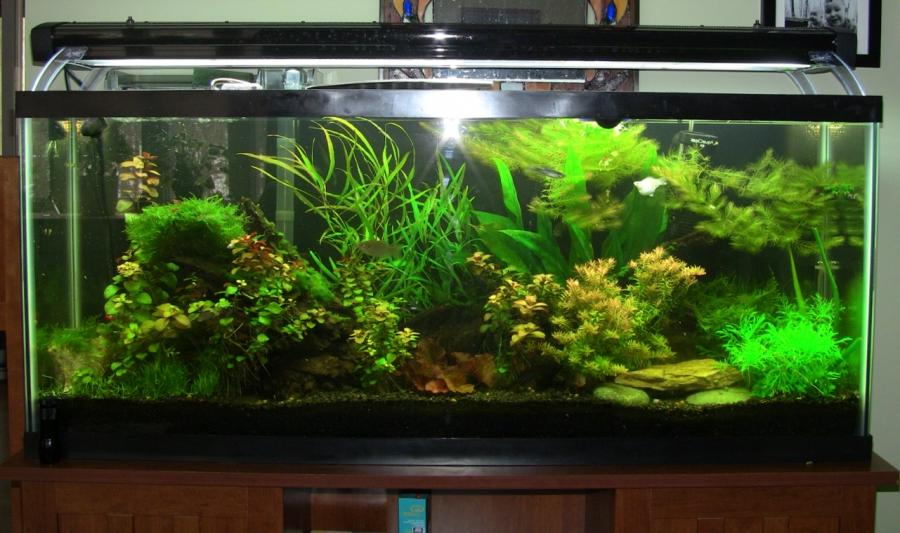 Pet E Aquarium : The fish in there change from time to time, but are all tropical...