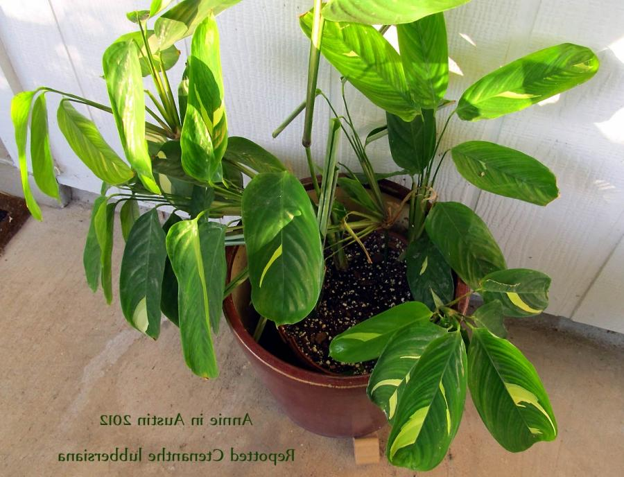 House Plant Photos And Names