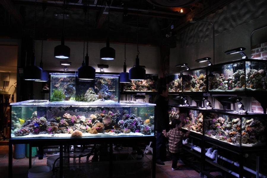 Photo gallery aquariums for Fish store houston