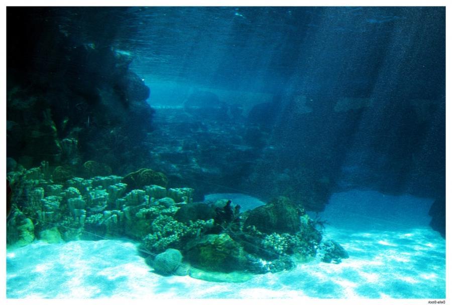 Deep Impact Boats >> Deep ocean floor photos