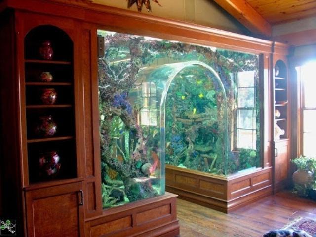 Aquariophilie photo aquarium for Idee deco aquarium