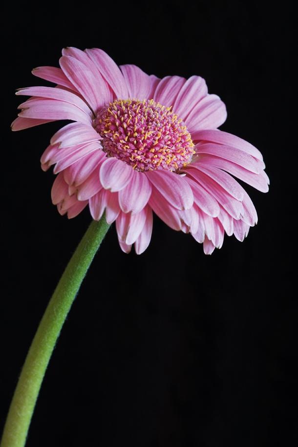 Best Lens Flower Photography