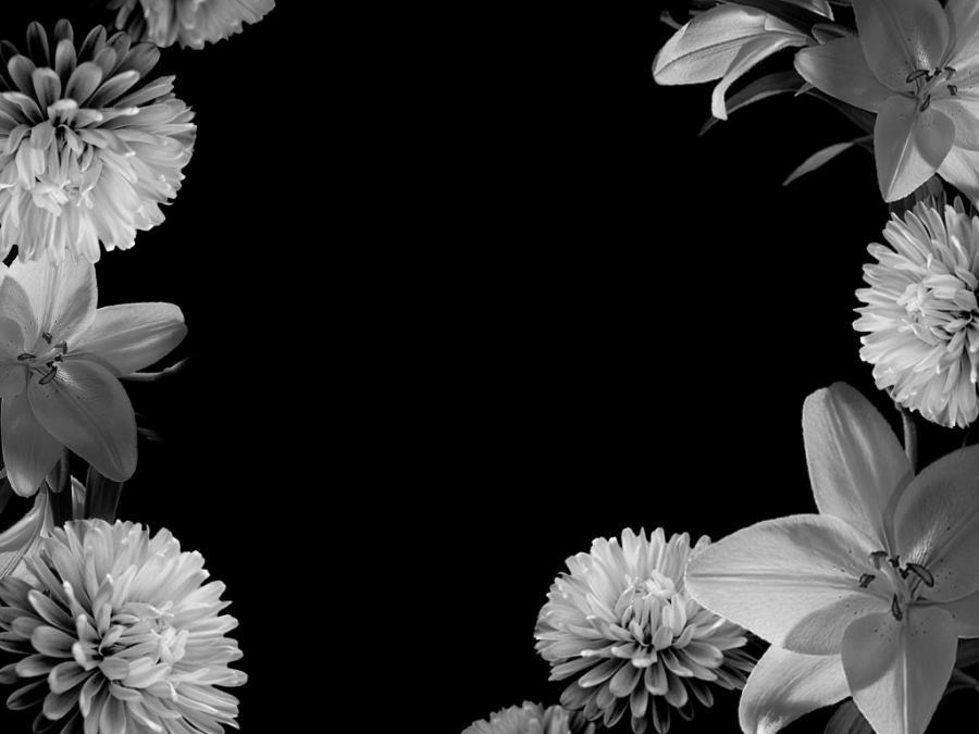 Black And White Softball Myspace Layouts 79